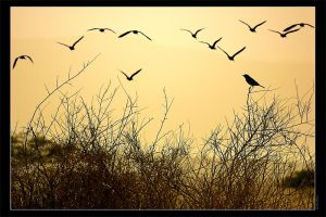 Waiting For The Sun by gilad