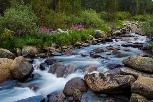 Rock Creek, Eastern Sierra by shubat