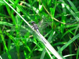 Dragonfly2 0054 by Maxine190889