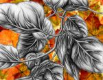 Leaves Study by Coco-Puppy-Fluffy