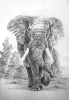 African Elephant by Leogon