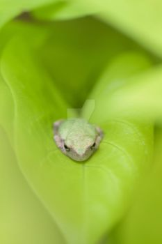 Love Frog by justinmatthew