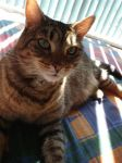 My Cat Missy. by My-Miserable-Romance