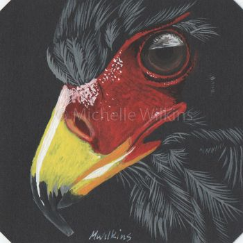 Bateleur Eagle by DragonsDust