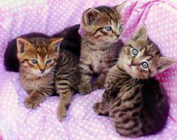 Happy Three Kittens by Lylly55