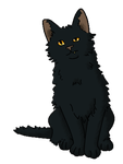 Black Confused Cat by DeathPhantom