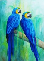 Blue and Gold Macaws by KathleenCasey