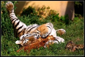 The cuddle branch by AF--Photography