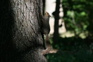Nutty Squirrel by Silver-Dew-Drop