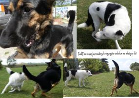 Dog Fight Stock Pack 2 by galianogangster