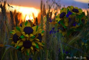 Sunset with sunflowers by cridiana