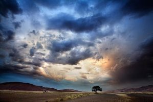 After the rain by Zefisheye