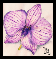 Orchid by TheUnconfidentArtist