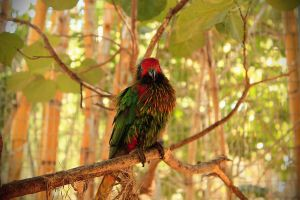 Colorful Parrot 2 by ItaRoyaNx