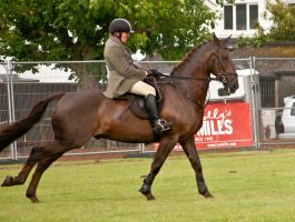 Jumping stock 59 by Kennelwood-Stock
