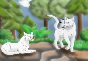 Whitestorm and Willowpelt by Swiper3