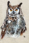 Owl.. by Leftblind
