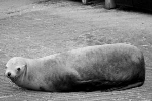 Seal by IllusionsGlade