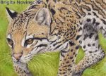 Ocelot ACEO by Evriale