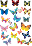 Beautiful butterfly by vanessyca71