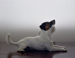Dog Portraits by Elise-in-Oz