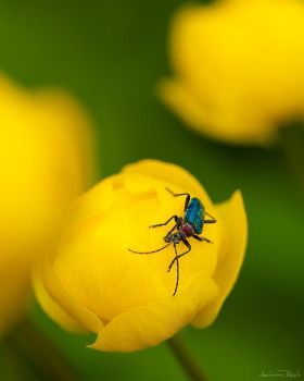 Don't bug me by AndreasResch