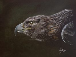Golden Eagle by Samscrapbook