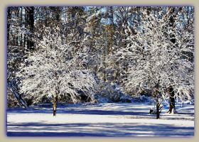 Snowy Dogwoods by bewilderedconfused