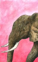Inked Elephant Colored by brandonolterman