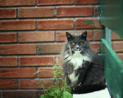 Urban Cat by Sortvind