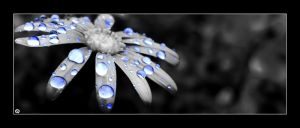 + Droplets Revisited by silentglaive