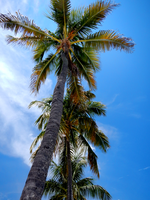 HDR Palms by ScubaproNicRegler