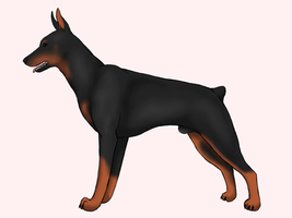 Dobermann by Suomen-Ukonilma