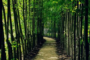 Walkway of peace by peaceloverainbows