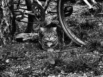 Cat Stole My Bike 02 by Mr-Fuso