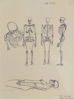 Anatomy practice by fulminatingpotion