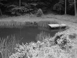 The Pond by AiPFilmMaker