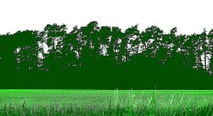green forest by Mittelfranke