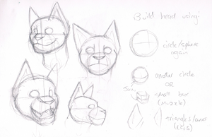 A sort-of tutorial on feline heads by Racesolar