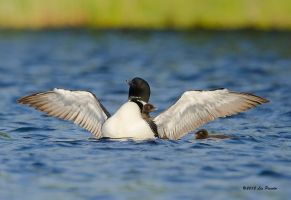 Learning to Fly? by Les-Piccolo