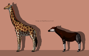 Giraffe Vs. Okapi by Morgan-Michele