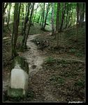 Path to the Grave by jonnydror