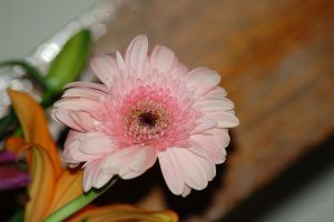 flower- pink by Dandelion-lion-stock