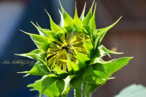 Becoming a Sunflower by Scooby777