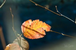 autumn leave by JuliaGeisler