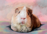 Morky the Guinnea Pig by Angiegsnz