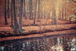 .: Golden Forest :. by Frank-Beer