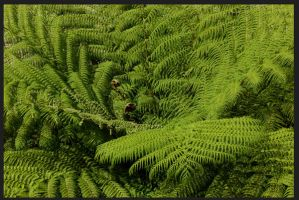 Green visions by PauloOliveira