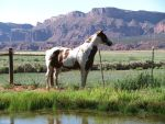 Horses 284 .:Stock:. by WesternStock