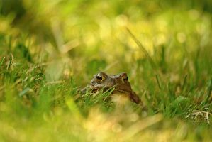 frog Eyes by SvitakovaEva